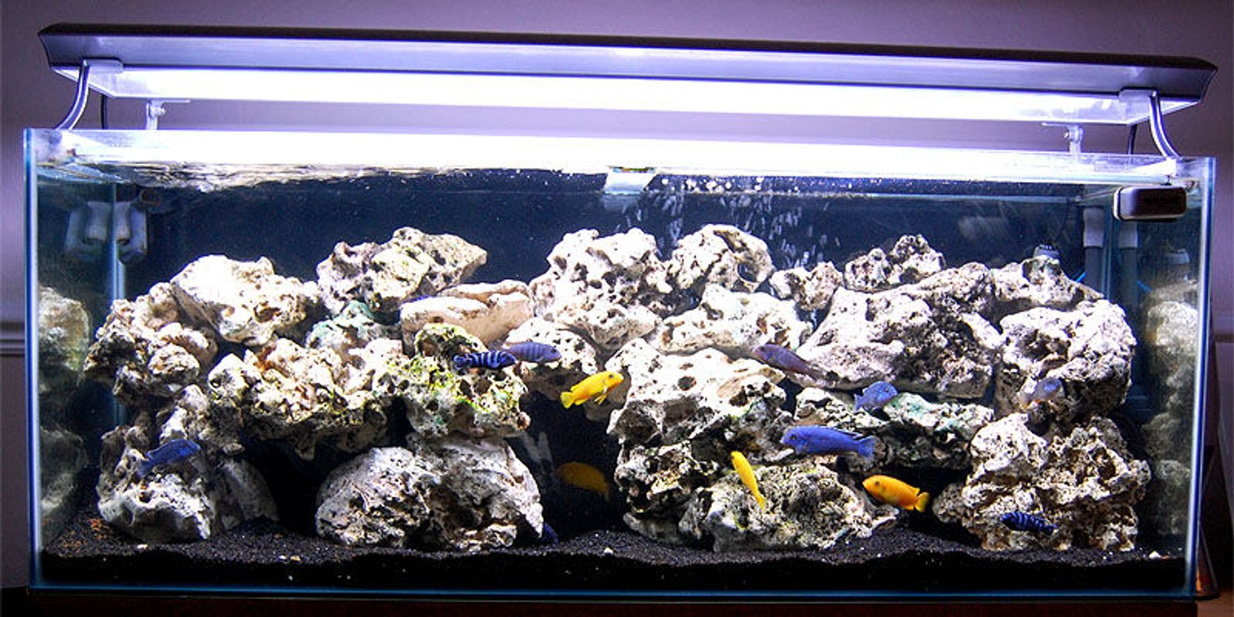 The  Best Fish Tank Crushed Rock for 2021