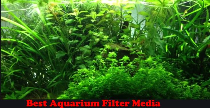The Best Aquarium Filter Media for 2020
