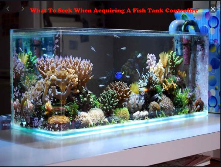 When Acquiring A Fish Tank Controller